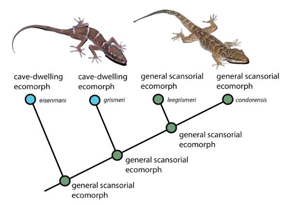 Gismer et al. 2015