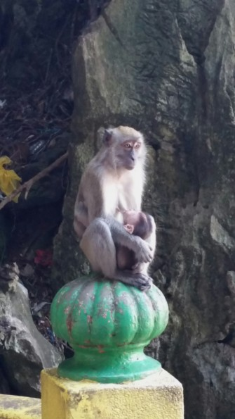 Nursing Monkey at Batu Caves
