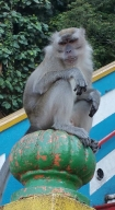 Long tailed macaque. He got his grumpy face on!