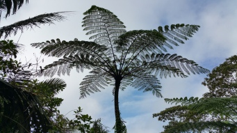 Palm ferns a great inicator that you are in cloud forest